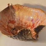 CONCHIGLIA ROSSA 150x150  Shells